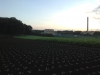 Cabbage and burdock fields with garbage incinerator on the horizon