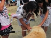 Petting Therapy Dog