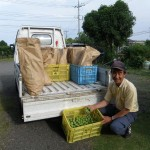 Team Haruna gathering unripe plums